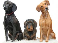 Hunde Rassen