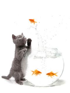 Katzen spielt