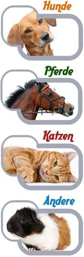 Bild Haustiere