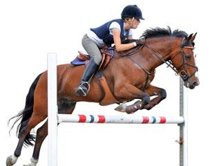 Turnier Pferd
